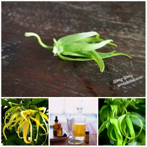 collage ylang