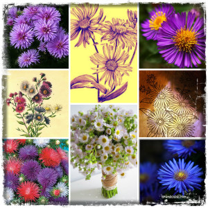 collage aster