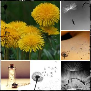 collage dandelion