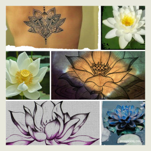 collage lotus