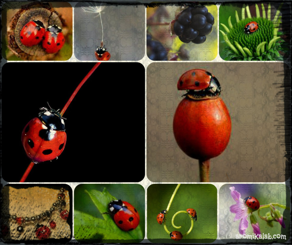 collage lady bug