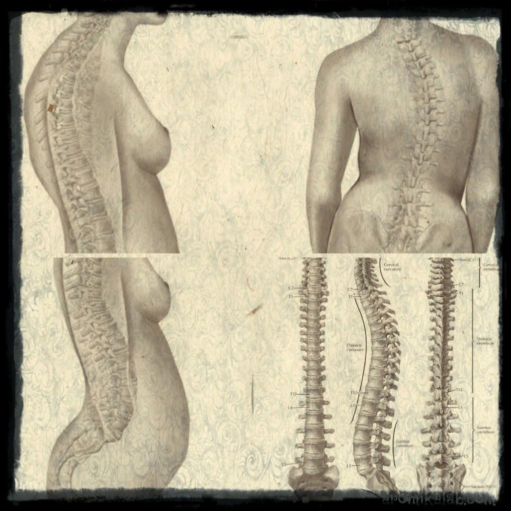 collage гръб видове-1