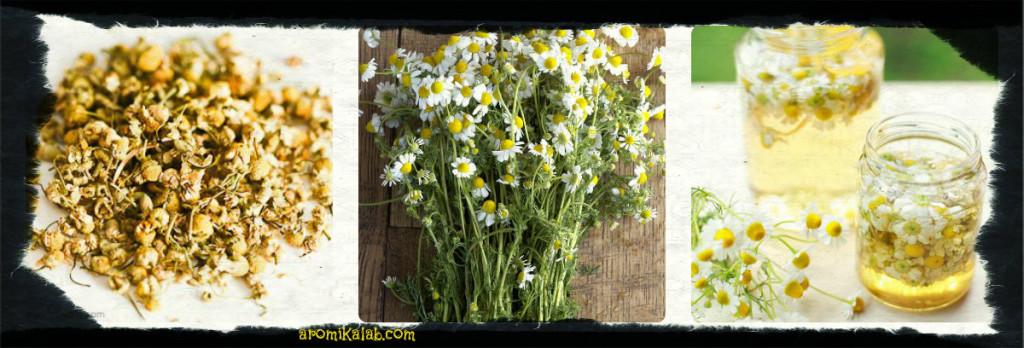 collage chamomile 1