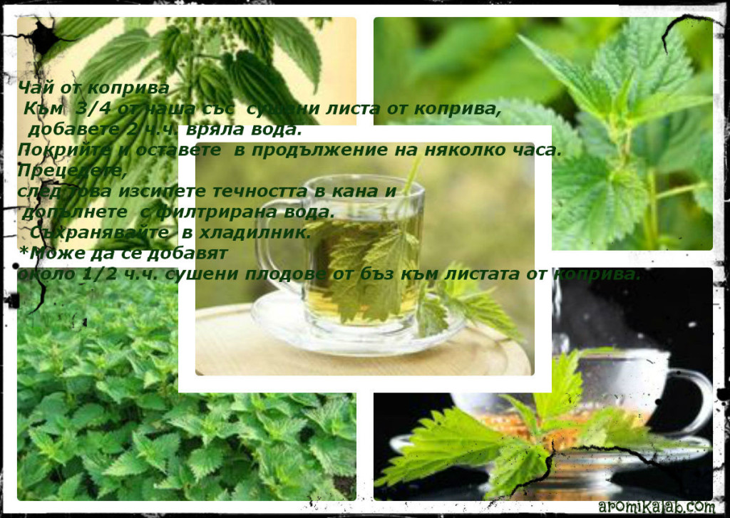 collage nettle1