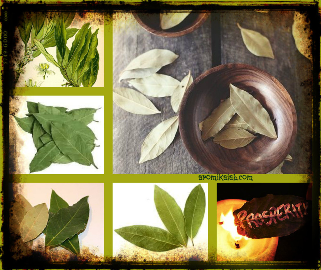 collage bay leaf