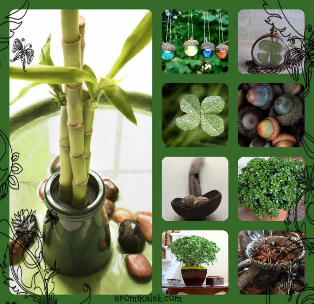 collage lucky plants